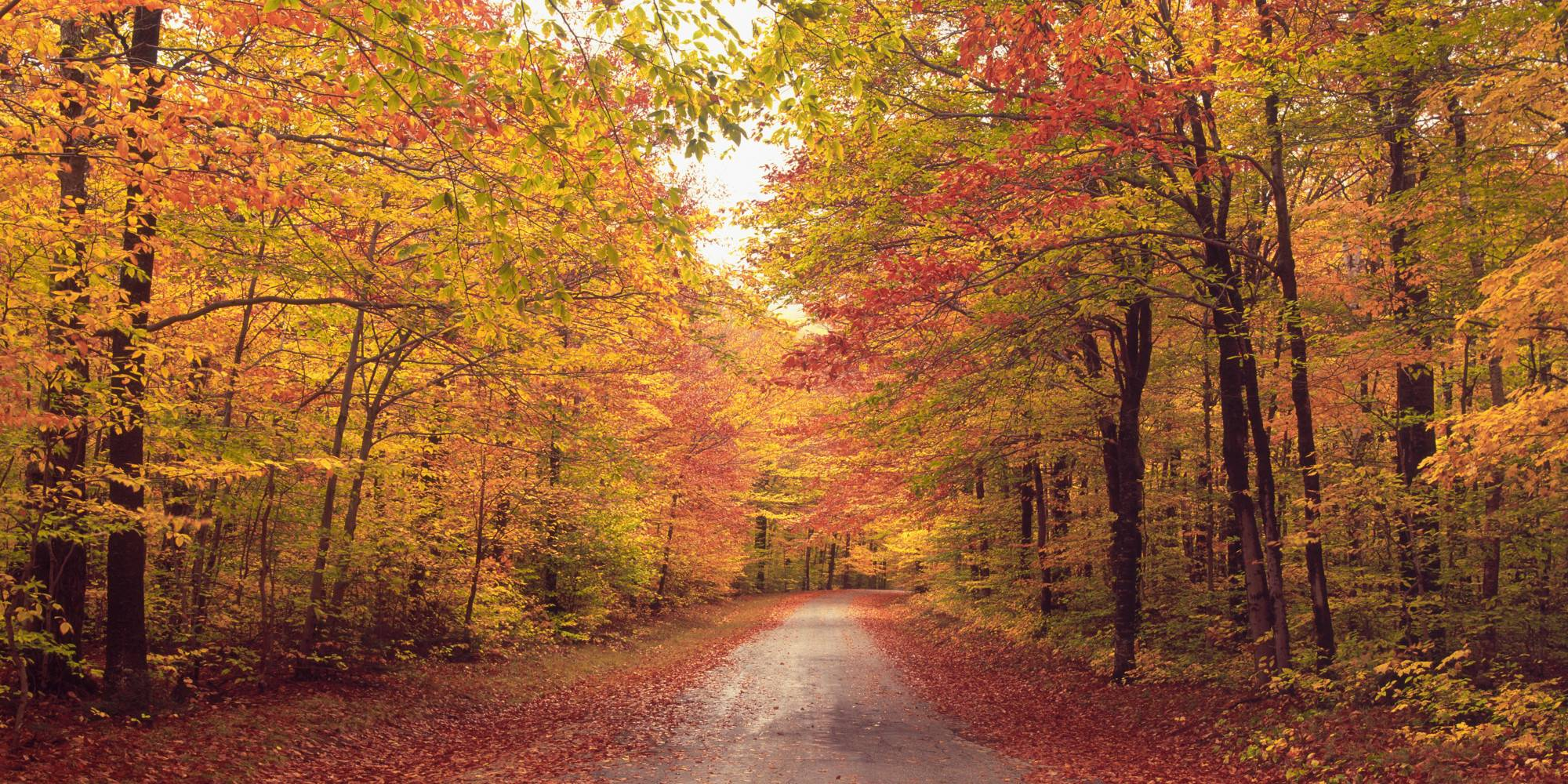 autumn_path